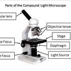 Microscope PowerPoint Introduction Lesson