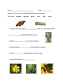 Monarch Butterfly Matching Worksheet