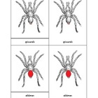 Montessori Three Part Cards - Parts of a Spider