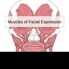 Muscles of the face and head.