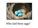 Oviparous (Egg -laying) Animal PowerPoint - Adjective Study