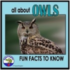 Owls - Fun Facts About the Life of an Owl PowerPoint