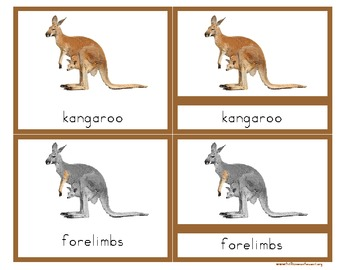 Parts of a Kangaroo- Montessori Nomenclature Cards with De