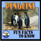 Penguins - Fun Facts About the Life of a Penguin PowerPoint