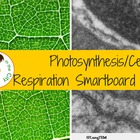 Photosynthesis and Respiration Review Game/Word Sort