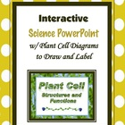 Plant Cell Diagram (Structures and Functions) PowerPoint Lesson