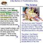 Plants: Lesson 8: Pollination & Angiosperm Reproduction
