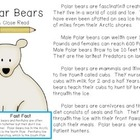 Polar Bear: A Close Read