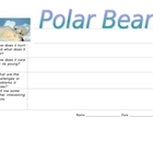 Polar Bear Graphic Organizer