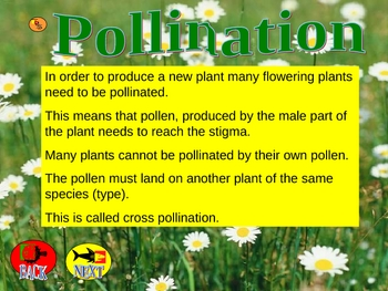 Pollination PowerPoint Lesson
