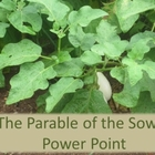 Power point: Plants and the Parable of the Sower (science)
