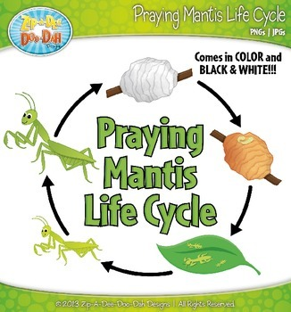 Praying Mantis Life Cycle Clip Art Set — Comes In Color and Black & White!