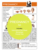 Pregnancy Content Sheet, Worksheet And Answer Key