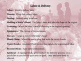 Pregnancy Powerpoint 3 Labor and Delivery