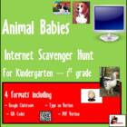 Internet Scavenger Hunt - Primary Grades -  Animal Babies