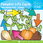 Pumpkin Life Cycle Clipart + Line Art - Graphics From the Pond