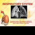 Respiratory System Power Point