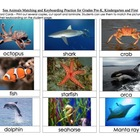 Sea Animals Matching and Keyboarding Practice