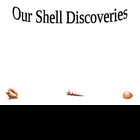 Sea Shell Discoveries