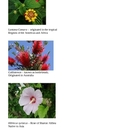 Southern Butterfly Garden / World Plants Lesson