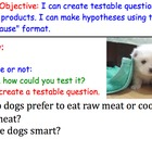 Testable Questions (Scientific Method) - Lesson Presentati
