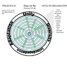 The Wheel of Life Graphic Organizer