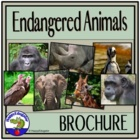Endangered Animal Brochure Project with Rubric - The White