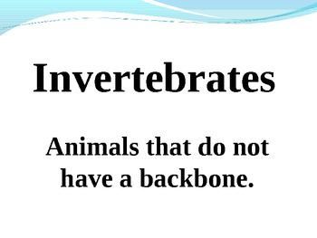 Types Of Invertebrates