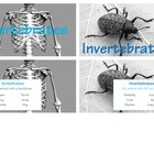 Vertebrates vs. Invertebrates
