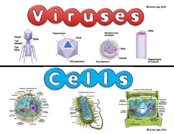 Viruses and Cells (Compare & Contrast) TEK B.4C