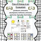 food webs, food chains, and the flow of energy in an ecosystem