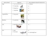 3rd Grade Science Animal Adaptation Graphic Organizer/Chart