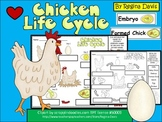 A+ Chicken Life Cycle Labeling & Word Wall