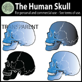 A Freebie Human Skull Clipart {Messare Clips and Design}