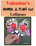 Animal Cell & Plant Cell Valentine's Lollipops
