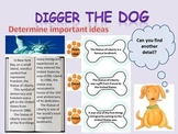 Beanie Baby Inspired Comprehension Strategies PowerPoint Lessons