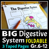 Digestive System Foldable - Big Foldable for Interactive N