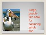 Bird Beaks and Feet Adaptations
