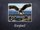 Birds Vol. 05: Eagles - PowerPoint Slideshow Presentation