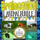 Brain Break PowerPoint Animal Braincation Bundle