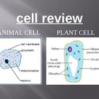 Cells - A Jeopardy Review Game on Animal and Plant Cells