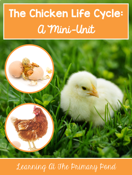 Chicken Life Cycle Unit for PreK, Kindergarten, or First Grade