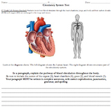 Circulatory System and Digestive System Assessment (Free R