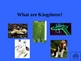 Classification of Living Things Jeopardy Game Powerpoint