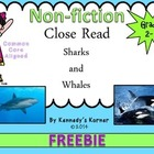 Close Read Sharks and Whales FREEBIE Common Core Aligned