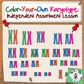 Color Your Own Karyotype: Independent Assortment of Chromosomes Lesson