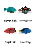 Coral Reef Cards