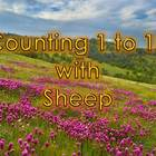 Counting 1 to 10 with Sheep
