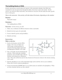DNA structure worksheet:  Identifying nucleotides