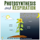PDF Day and Night Photosynthesis Printable Worksheet